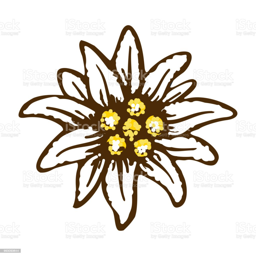 Coloriage Fleur Edelweiss.Edelweiss Fleurs Des Alpes Allemagne Profession Logo Symbole