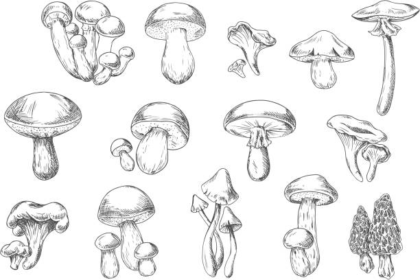 edible and poisonous wild mushrooms, sketch style - 버섯 stock illustrations