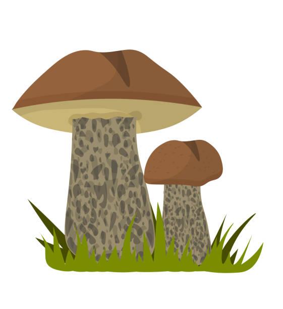bildbanksillustrationer, clip art samt tecknat material och ikoner med ätlig aspsvamp i gräs isolerat på vitt - höst plocka svamp