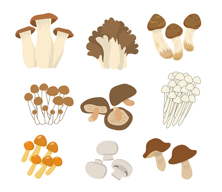 Edible mushroom platter set