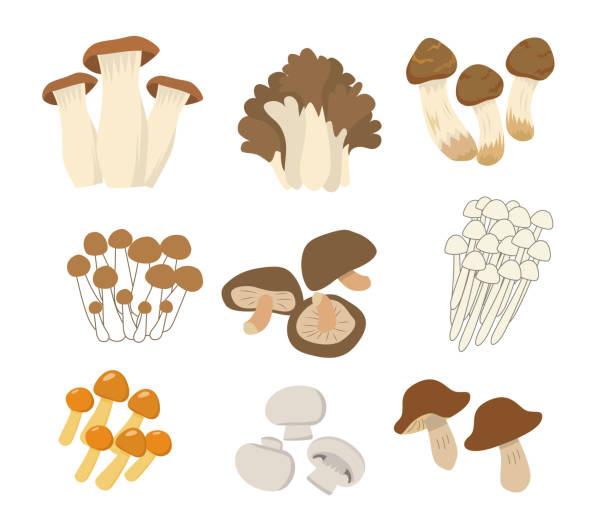 食用マッシュルームプラッターセット - 松茸点のイラスト素材/クリップアート素材/マンガ素材/アイコン素材