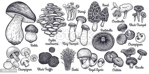 Edible mushrooms big set.
