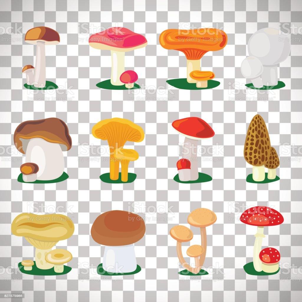 Edible mushrooms on transparent background vector art illustration