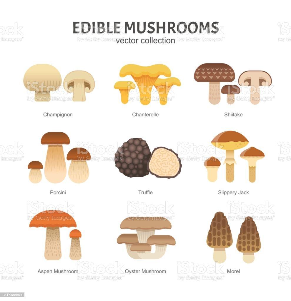 Edible mushrooms set. vector art illustration