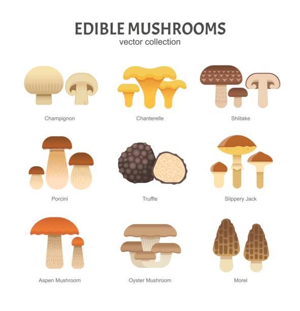 식용 버섯 세트입니다. - 버섯 stock illustrations