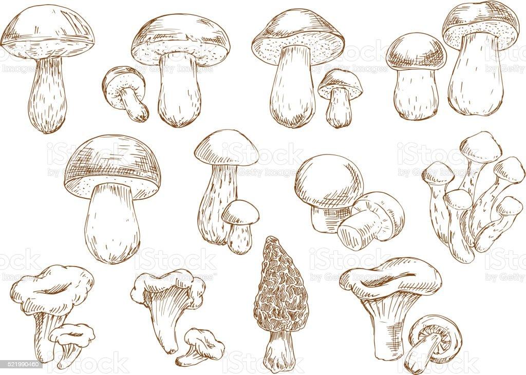 Edible mushrooms sketch drawing icons vector art illustration