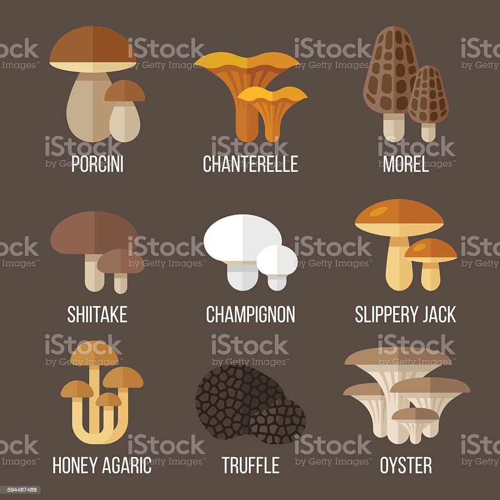 Edible mushrooms vector art illustration