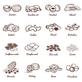 Edible nuts and seeds vector icons. Protein healthy food set