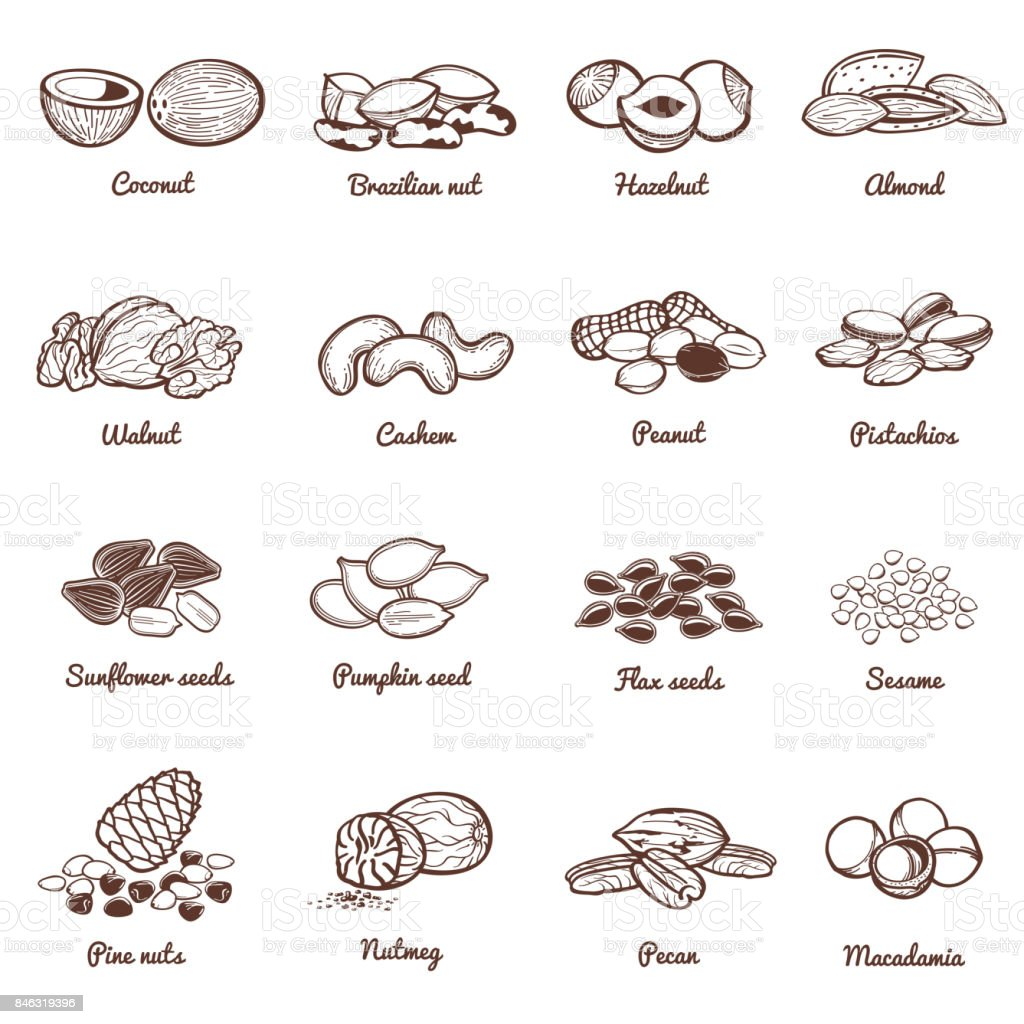 Edible nuts and seeds vector icons. Protein healthy food set vector art illustration