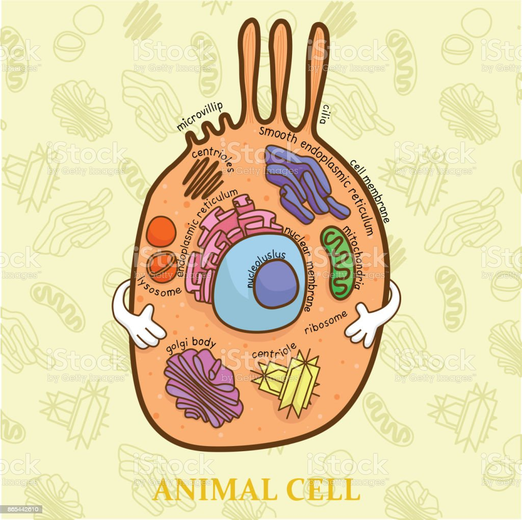 Education Chart Of Biology For Animal Cell Diagram Stock Vector Art ...