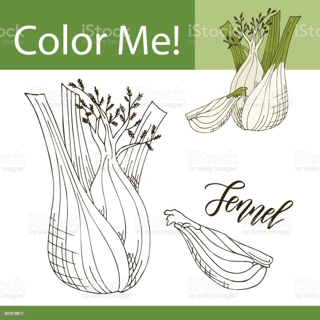 education coloring page with vegetable hand drawn vector