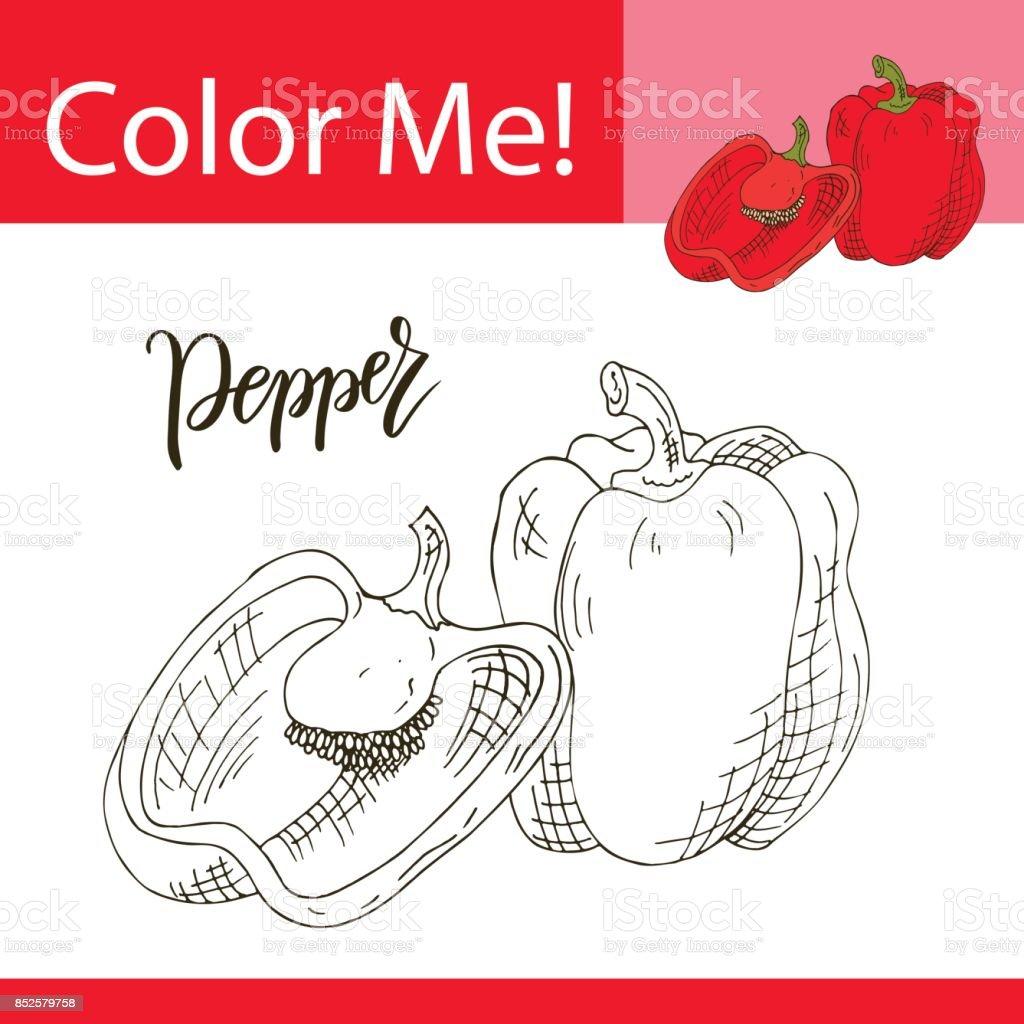 Sebze Ile Eğitim Boyama Sayfası El çekilmiş Biber Vektör çizim Stok