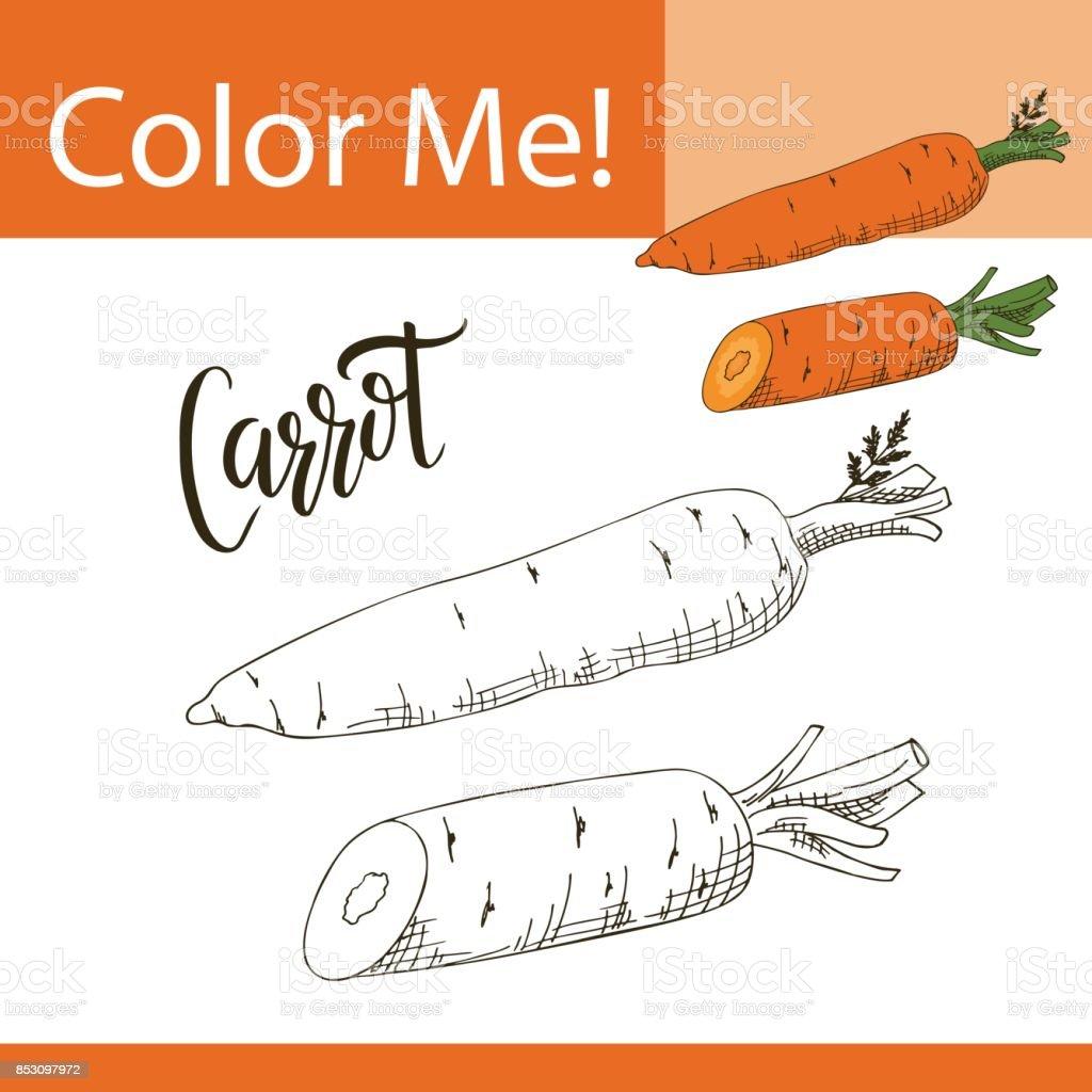 Sebze Ile Eğitim Boyama Sayfası Havuç Vektör çizim El çekilmiş Stok