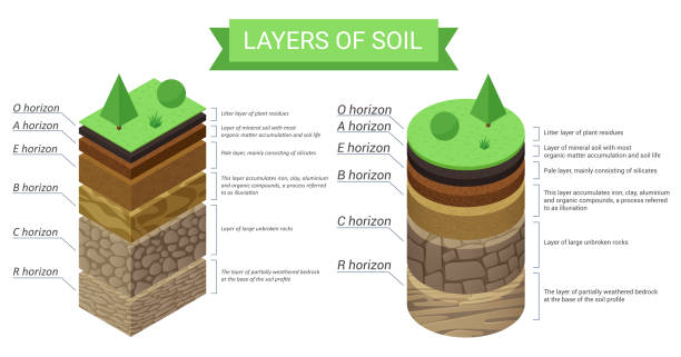 Education isometric diagram and detailed description of soil layers. Plant residue, green grass, fine mineral particles, sand,clay, humus and stones vector illustration. Education diagram and detailed description of soil layers. Plant residue, green grass, fine mineral particles, sand,clay, humus and stones vector illustration rock formations stock illustrations