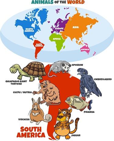 educational illustration of cartoon South American animals
