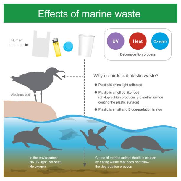 Effect of marine waste. vector art illustration