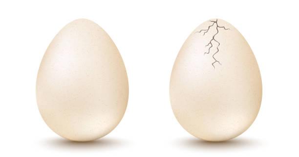 bildbanksillustrationer, clip art samt tecknat material och ikoner med ägg och spruckna ägg - ägg