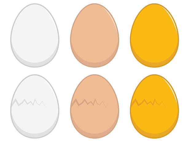 stockillustraties, clipart, cartoons en iconen met egg illustration - egg