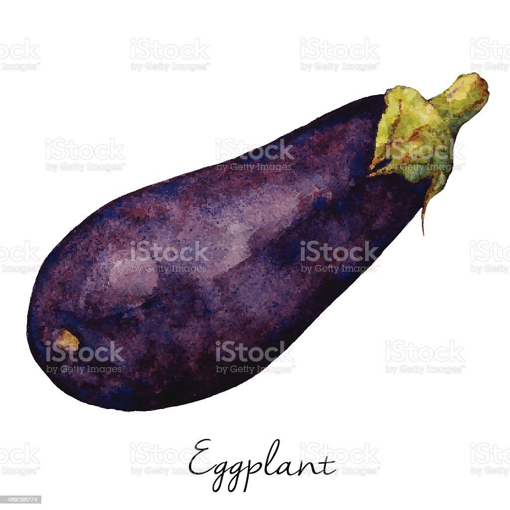 Eggplant Watercolor Sketch, Vector Illustration. vector art illustration