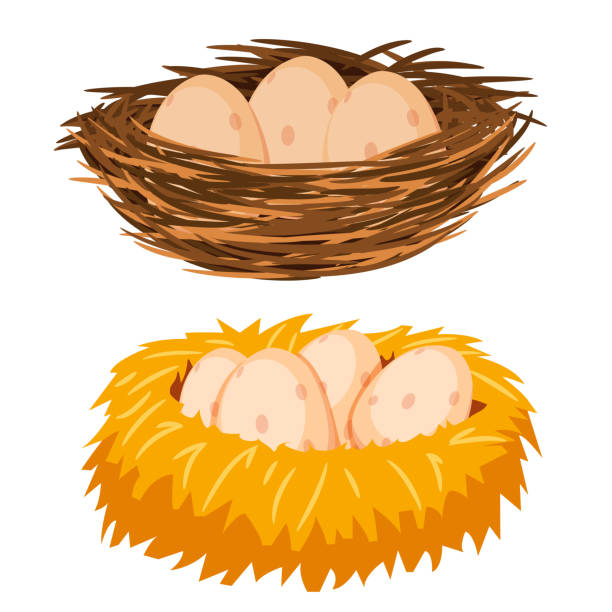 stockillustraties, clipart, cartoons en iconen met eieren in het nest - egg