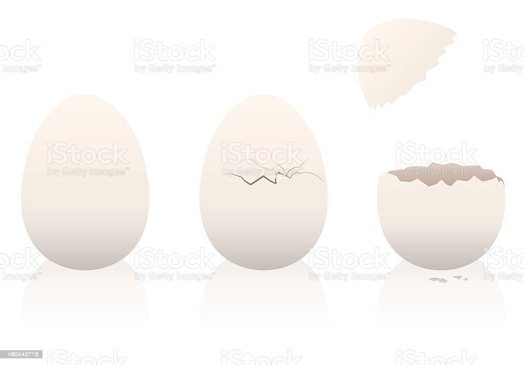 Eggs Intact Broken Open Eggshell vector art illustration