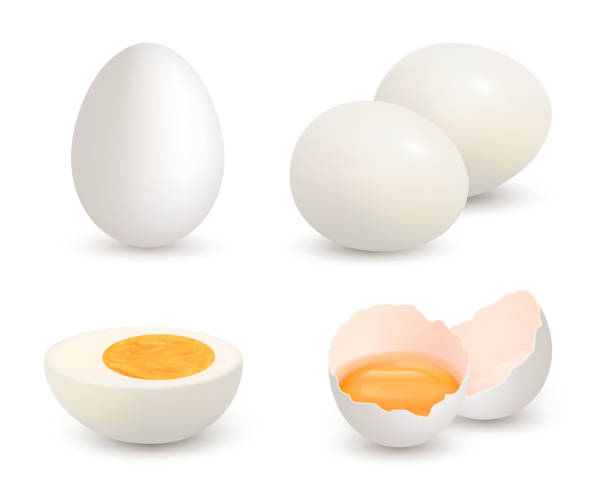 Eggs realistic. Natural healthy farm fresh food yolk and protein vector cracked shell chicken eggs Eggs realistic. Natural healthy farm fresh food yolk and protein vector cracked shell chicken eggs. Eggshell and protein, organic yolk illustration egg stock illustrations