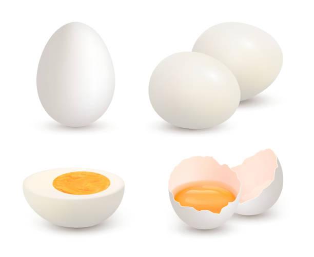 bildbanksillustrationer, clip art samt tecknat material och ikoner med ägg realistiska. naturlig hälsosam gård färsk mat äggula och protein vektor knäckt shell kyckling ägg - ägg