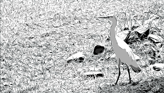 Egret In The Grass