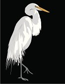 Great egret with mating plumage. AI vs 10 included.