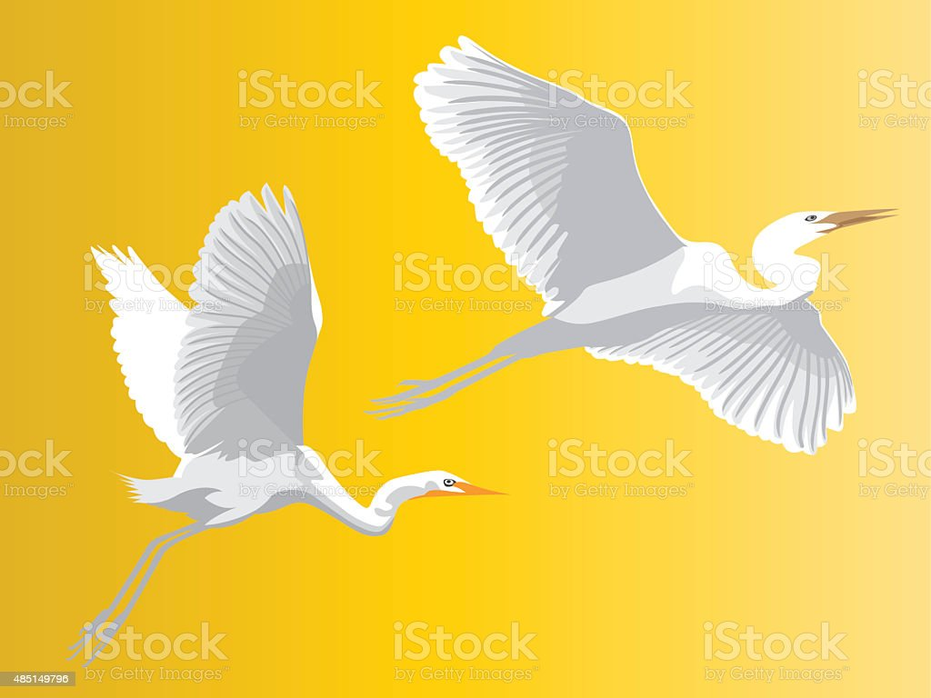 Egret vector art illustration