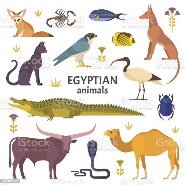 Egyptian animals vector id699804874?b=1&k=6&m=699804874&s=612x612&h=gj8aaqklhhakapxtr3hqvuz3xgo1sqsujqphpl lixo=