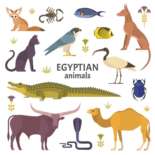 Egyptian animals. Vector illustration of African animals, such as camel, crocodile, buffalo, ibis, cat, Egyptian dog, and scorpio isolated on white. crocodile stock illustrations