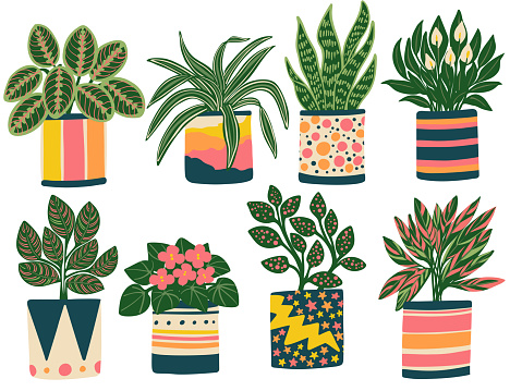 Eight Houseplants in Colorful Planters 1