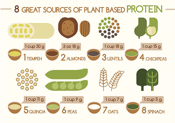 Eight sources of plant based protein Illustrator 8 sources of plant based protein Illustrator temps stock illustrations