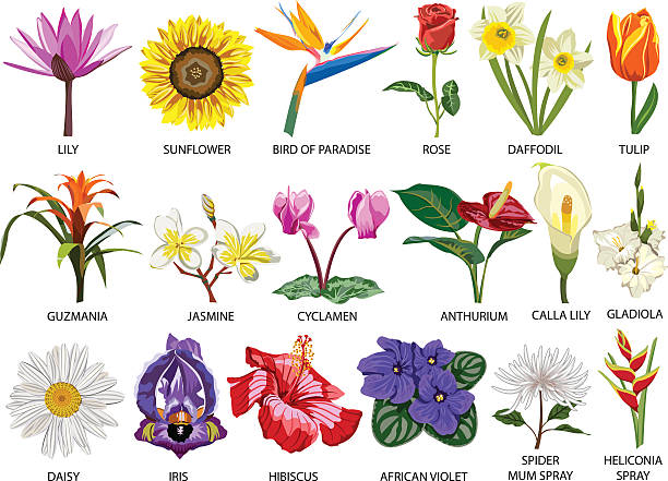 Eighteen Species of colorful flowers Set of Eighteen colorful most common species of flowers garden center stock illustrations