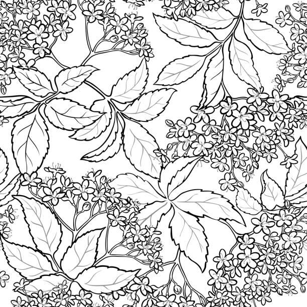 holunderblüten nahtlose muster - holunderstrauch stock-grafiken, -clipart, -cartoons und -symbole