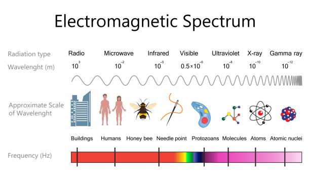 bildbanksillustrationer, clip art samt tecknat material och ikoner med elektromagnetiska spektrumet diagram - spektrum