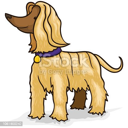 Hairy and elegant Afghan hound ready for a relaxing spa time and hair grooming.