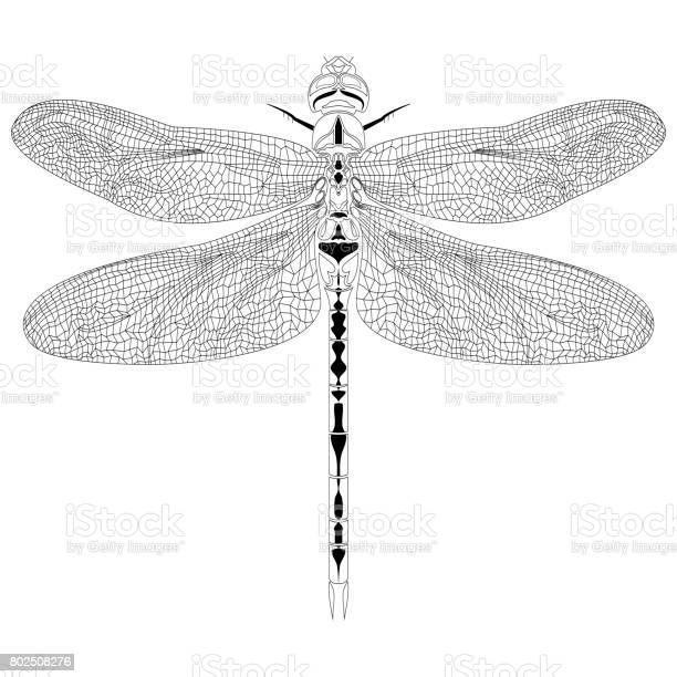 Elegant dragonfly insect detailed sketch in black and white vector id802508276?b=1&k=6&m=802508276&s=612x612&h=ea06h6grcdimkf4qhbzsyjp9qzookz0eaf9m2kedgvw=