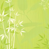Elegent bamboo green background- EPS 10