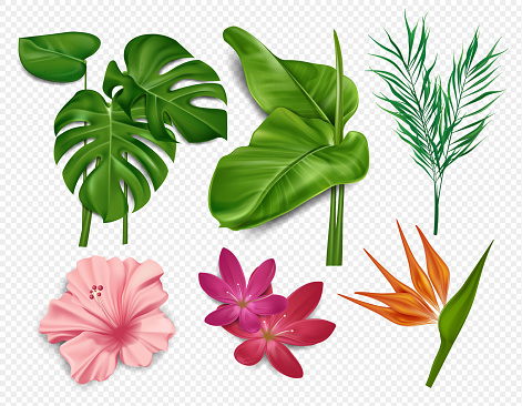 Elements of tropical flowers, palm leaves, hibiscus, lotus isolated on transparent background. Hawaiian sea flowers, floral elements. Vector illustration