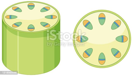 istock Elements of vascular tissue system in plants 1318565586