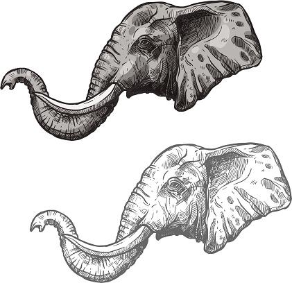 Elephant African Wild Animal Vector Sketch Icon Stock ...