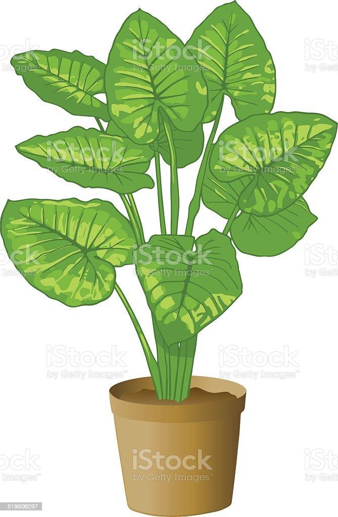 Elephant ear plant stock vector art more images of for Planta ornamental oreja de elefante