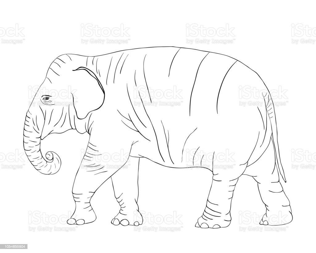 Elephant Pour Coloriages Isole Sur Fond Blanc Vecteur Vecteurs