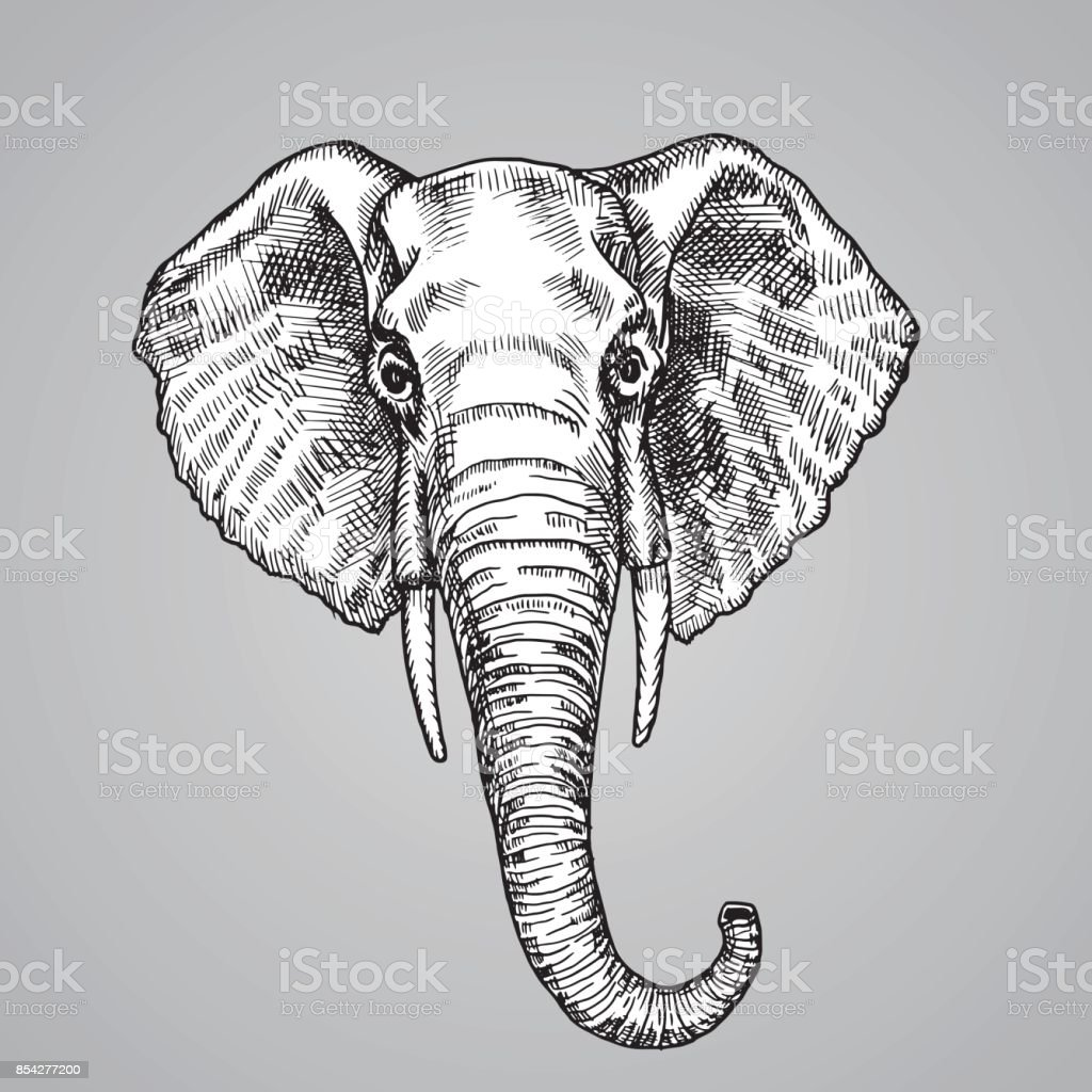 Elephant head black and white engraving style. A beautiful Indian animal in the sketch style. Vector illustration.