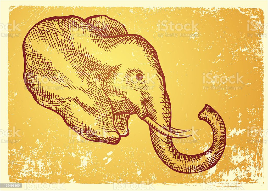 elephant head drawing vector art illustration