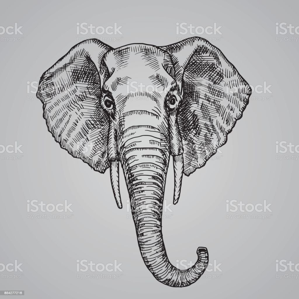 Elephant head engraving style. A beautiful Indian animal in the sketch style. Vector illustration.
