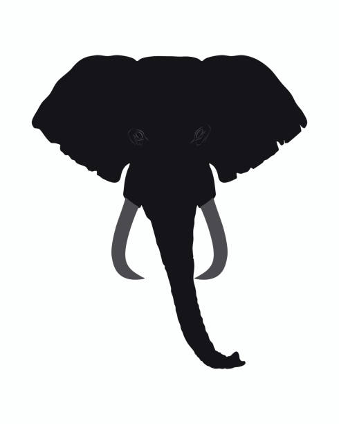 Elephant Head Vector Art Graphics Freevector Com Try to search more transparent images related to elephant head png |. elephant head vector art graphics freevector com