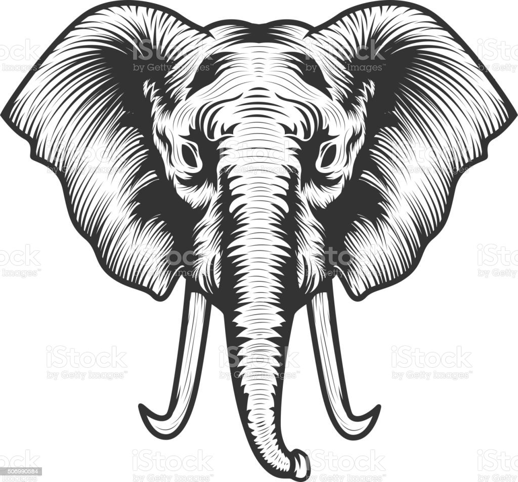 Elephant Head Illustration Stock Vector Art & More Images of Africa ...